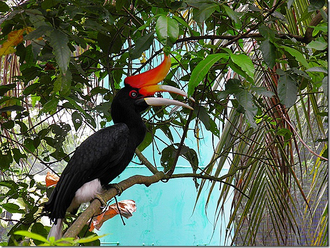 A visitor to the Hornbill Cafe.