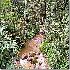 Cameron Highlands Trail No.4