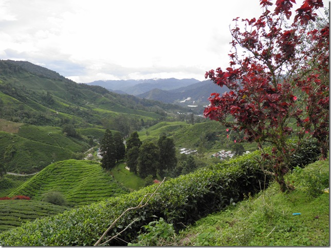 Boh Tea Estate