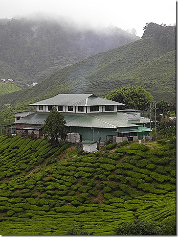 Cameron Valley Bharat Tea Estate