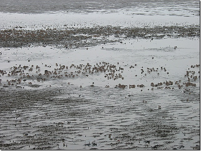 Sand crabs.