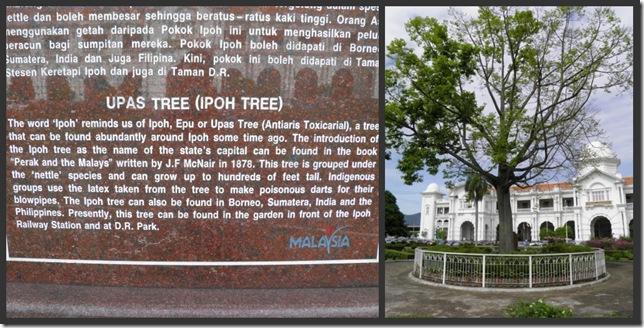 The Ipoh Tree