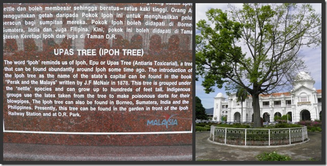 The Ipoh Tree