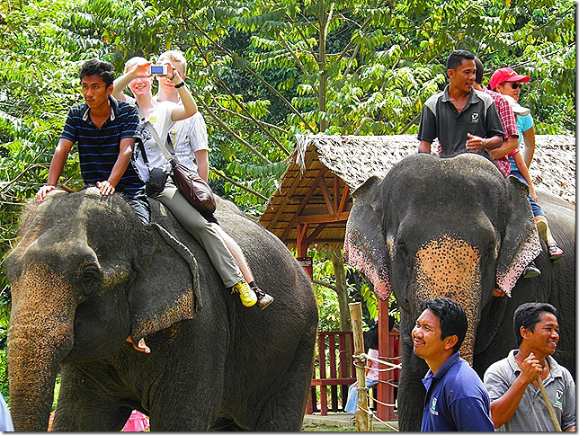 Elephant rides are one of the activities.