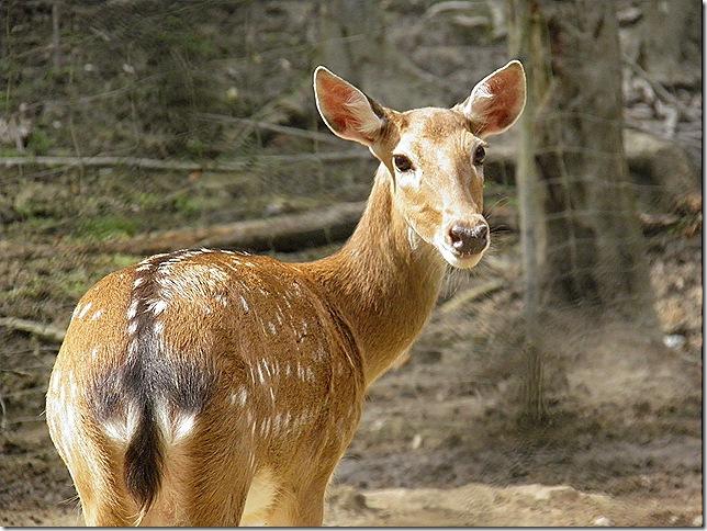 Deerland