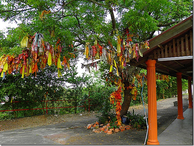 Neem wishing tree.
