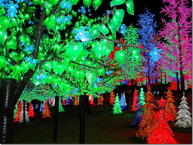i-city LED trees