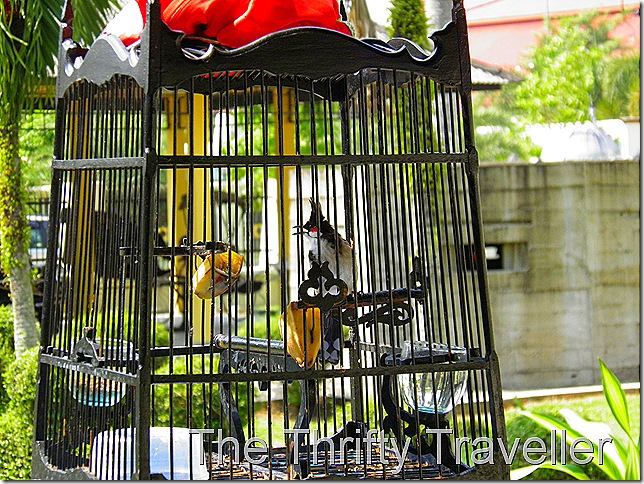 Bird Cage at the War Museum