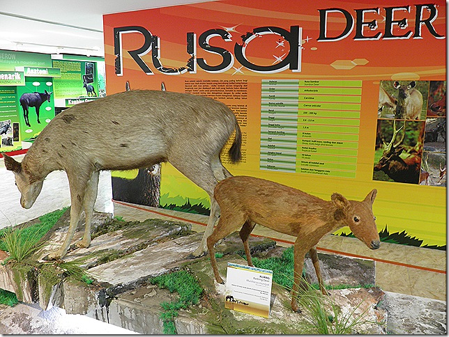 Endangered deer at Putrajaya Museum of Nature