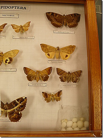 Moths and moth balls