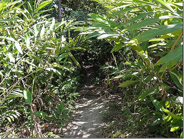 The beginning of the Tok Wan trail.