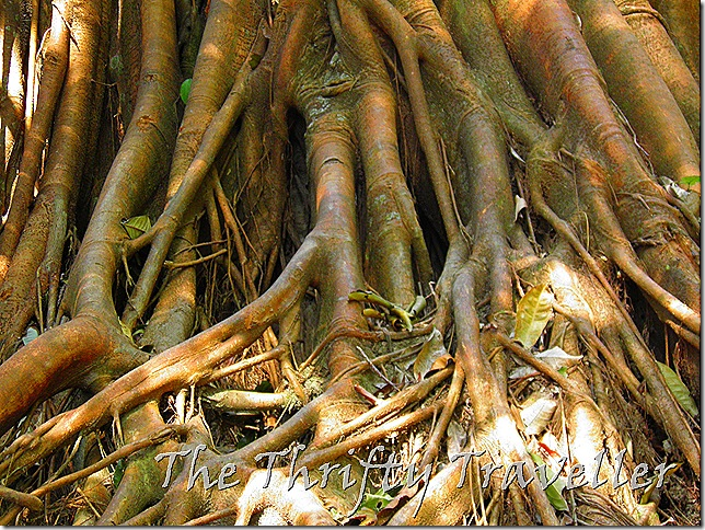 Find your roots on Gunung Tok Wan