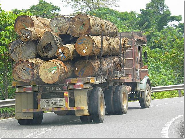 Logging in Pahang