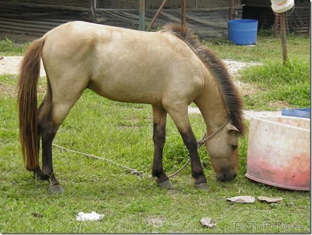 Pony at Ostrich Wonderland
