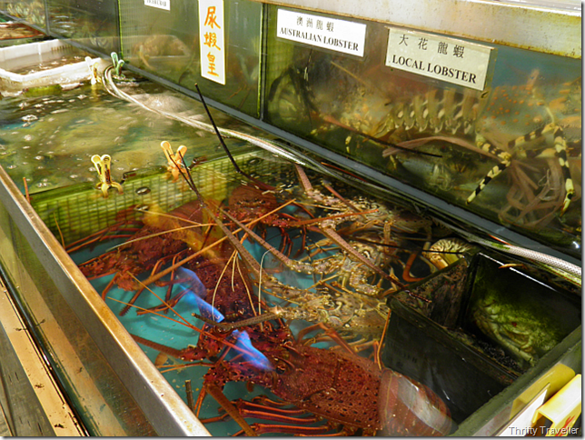Multicultural Lobsters
