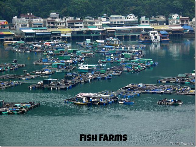 Fish Farms at Sok Kwu Wan