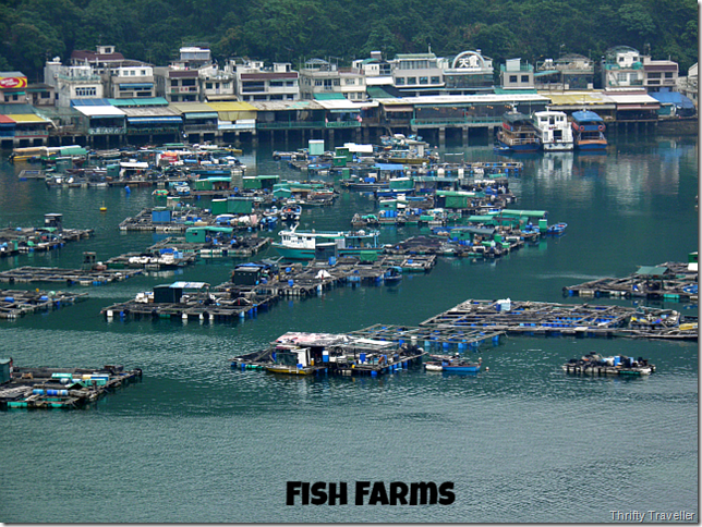 Fish Farms at Sok Kwu Wan