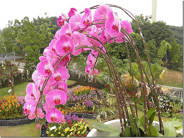 Orchid display at Floria 2013.