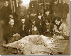 hachiko's death