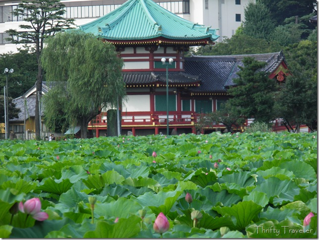 Lotus Pond at Ueno Park