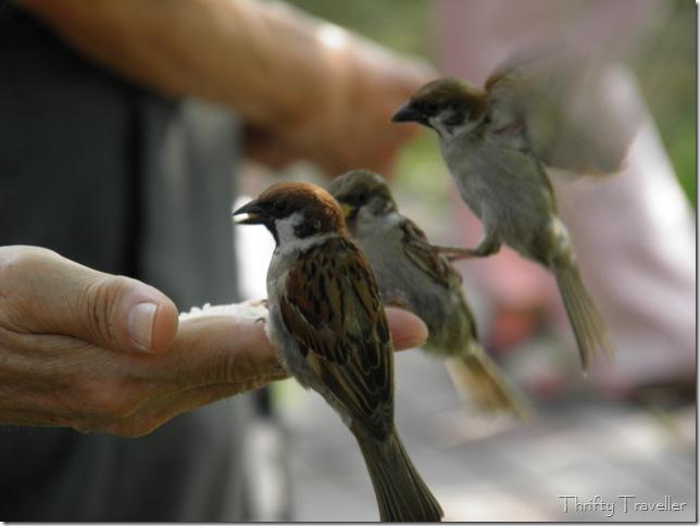 Bird Feeding at Ueno Park