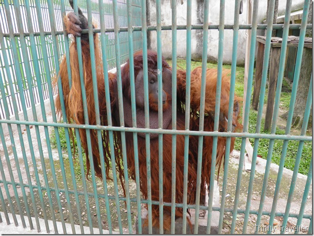Orangutan cage at Bukittinggi Zoo