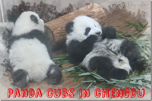 Relaxing panda cubs at Chengdu Research Base