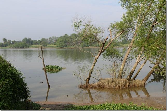 Perak River at Teluk Intan, February 2014