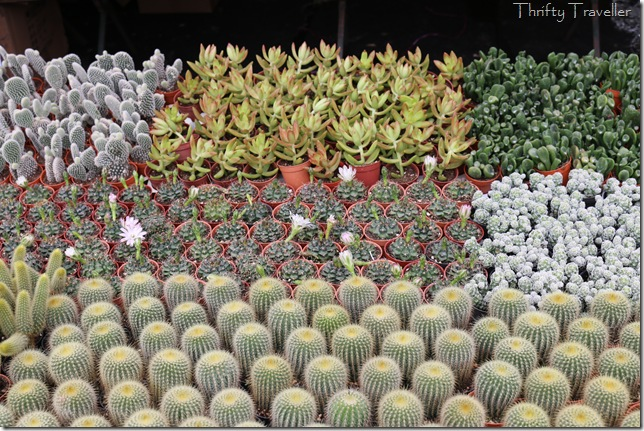 Cacti for sale at Floria 2014