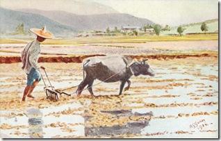 Hong Kong, Buffalo Plough oilette postcard