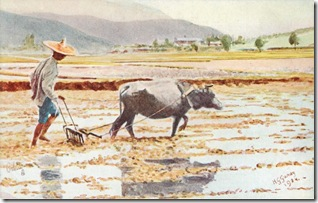 Hong Kong, Buffalo Plough oilette postcard
