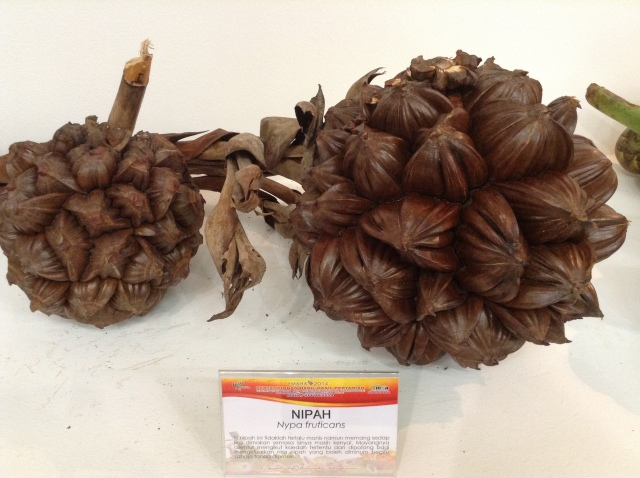 Nipa Palm Nuts