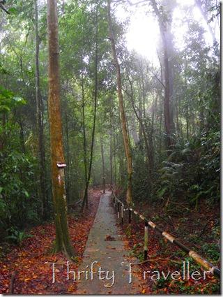 Path leading to Pulau Masjid Beach, Tanjung Tuan