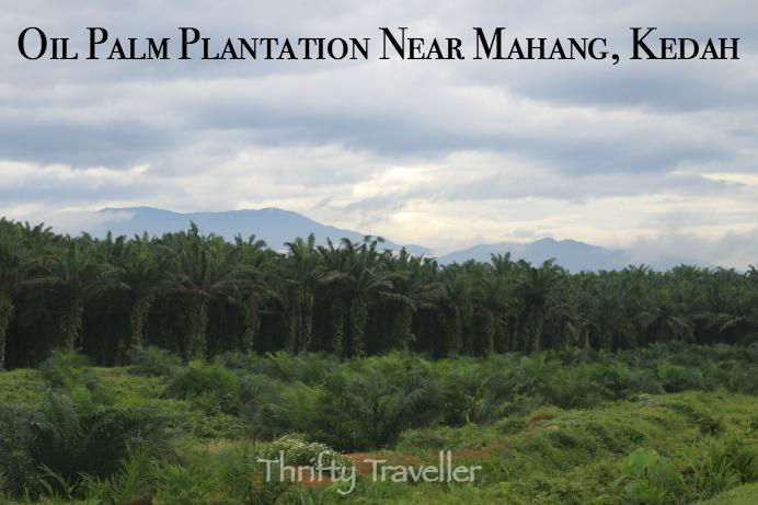 OilPalmPlantation Near Mahang Kedah