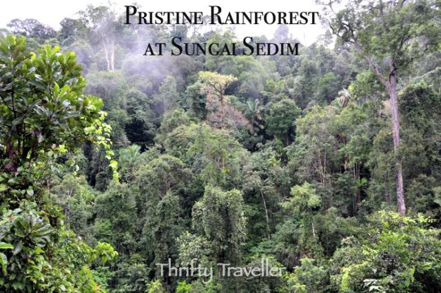 Pristine Rainforest At Sungai Sedim