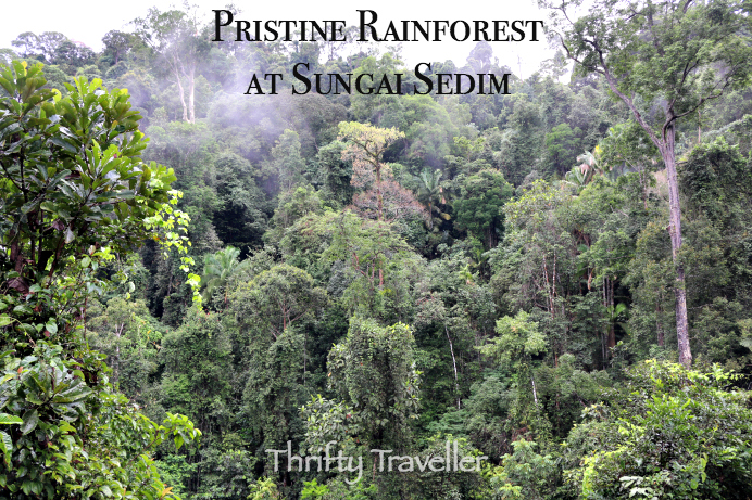 Pristine Rainforest At Sungai Sedim