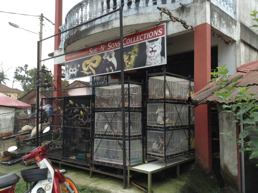 Sue N Sons Pet Collections