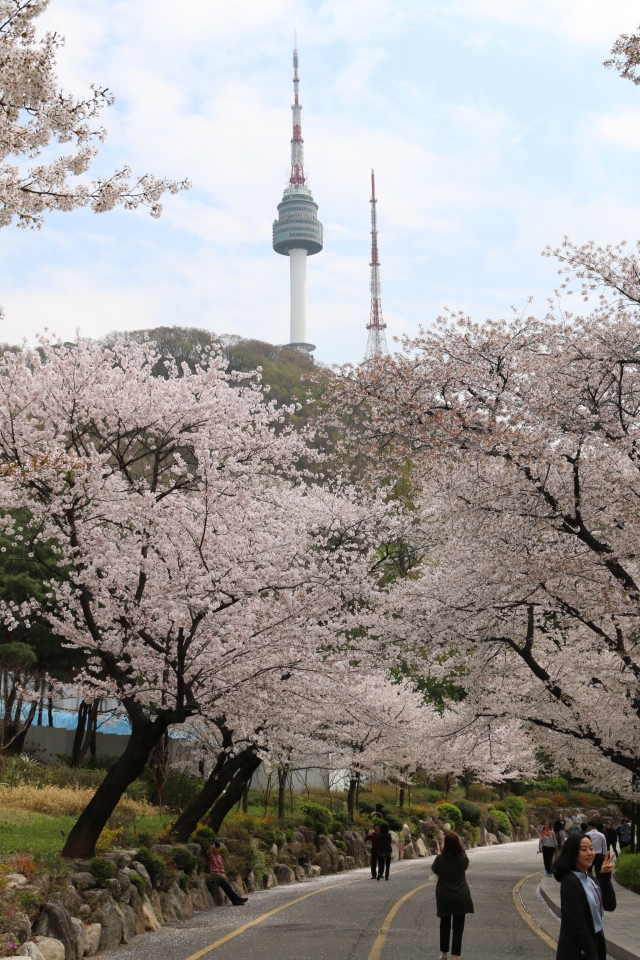 N Seoul Tower in Springtime