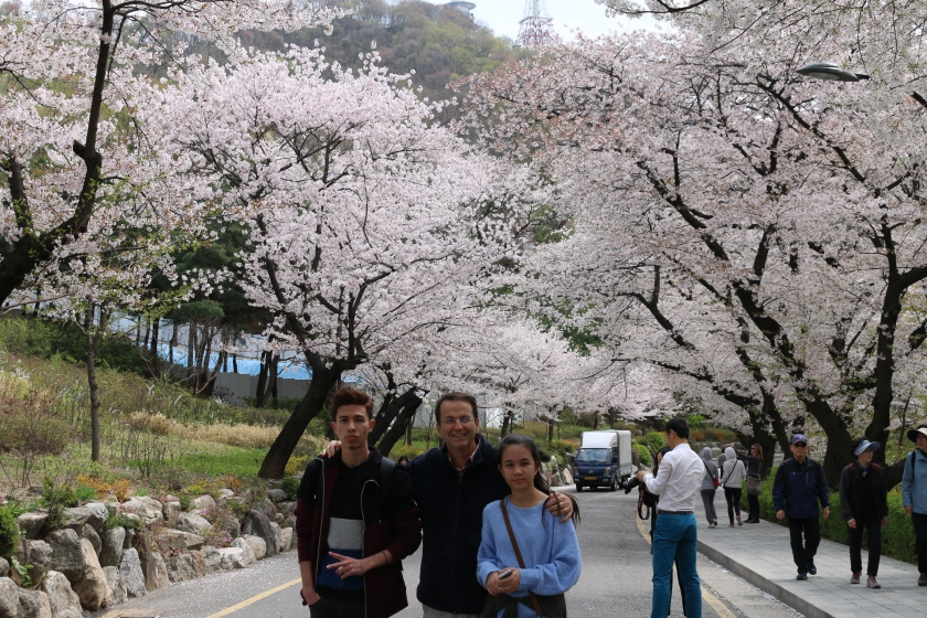 Cherry Blossom Viewing in Seoul