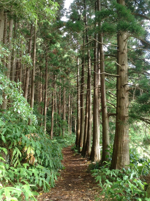 A lake-side trail at Sete Cidades.
