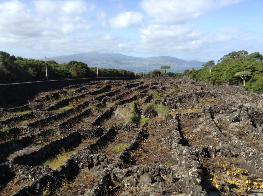 Museu do Vinho, Pico