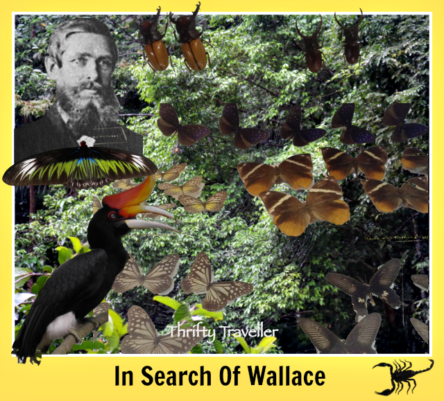 In-Search-Of-Wallace