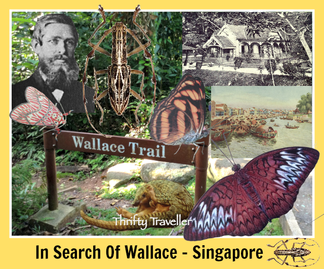 In-Search-Of-Wallace-Singapore