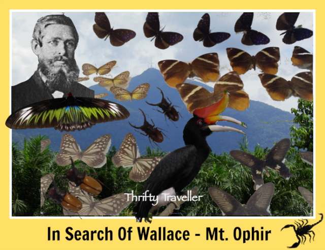 In Search Of Wallace - Mt. Ophir