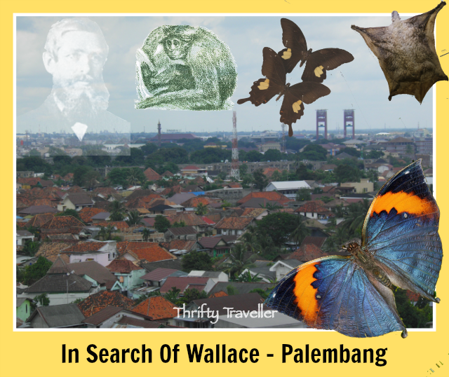 In-Search-Of-Wallace-Palembang