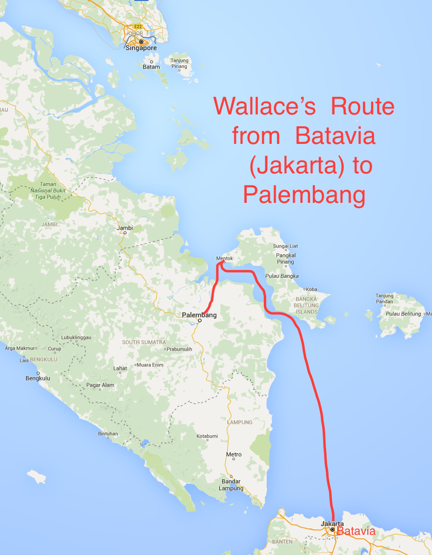 Wallace's Route from Batavia to Palembang
