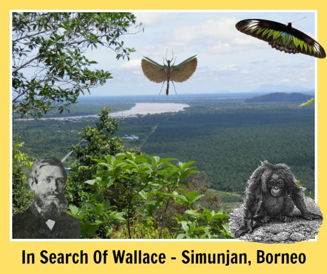 In-Search-Of-Wallace-Simunjan