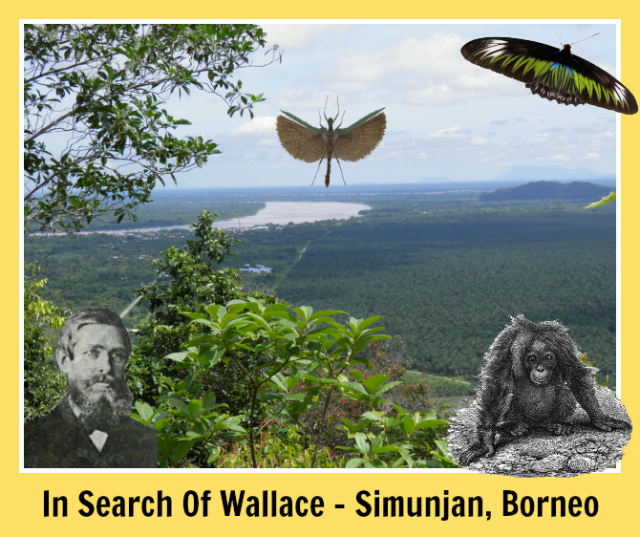 In-Search-Of-Wallace-Simunjan