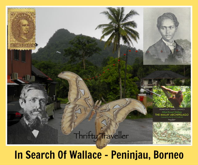 In-Search-Of-Wallace-Peninjau-Borneo