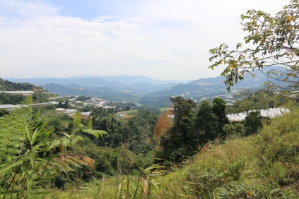 Polytunnels continue for some distance beyond the Cameron Highlands.